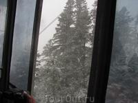 елки. сняты из приоткрытой кабинки канатки