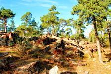 Городские ландшафты Мариехамна часто переплетаются с лесными прослоечками, что очень позитивно воздействует на восприятие.