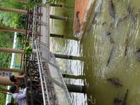 Крокодиловая ферма по дороге на водопад Янбай