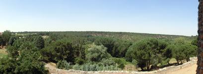 Со стен замка открывается панорама вплотную подступающего к нему леса.