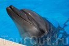 Дельфинарий..  Они необыкновенны!