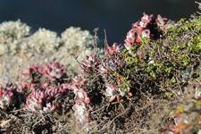 Растительность на скалах Пойнт Лобос