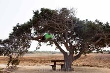 мой КОТ на дерево залез ))) Одинокое дерево на Каво Греко