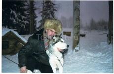 Сибирская хаска