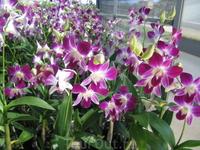 съедобные орхидеи