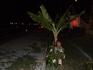 пальма...и Я