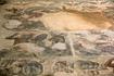 Фрагмент мозаики, сохранившейся с древних времён. В музее Карфагена.