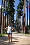 Императорские пальмы в ботаническом саду в Рио-де-Жанейро