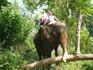 в деревне слонов. Супер экстремальное катание на слонах! Здорово!!! Особенно когда слон заходит в воду по уши.