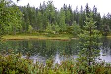 """Но, к счастью, дождь немного утих и Саша Рыжий показал нам дорогу к """"Алёнушкиному озеру"""", где располагается стоянка шаманов."""