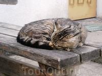 Спокойная и умиротворенная жизнь животных