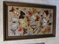 Коллекция бабочек.