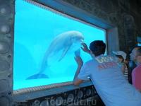 Общение с дельфином в натур парке Mundomar