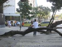 Дерево влюблённых?)