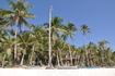 пальмы на берегу!