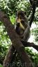 Кормим диких обезьян в джунглях
