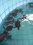 морские черепашки. им несколько месяцев