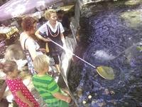 в одной из таверен живая рыба.,и водопады