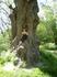 Интересно, сколько этому дереву лет??))