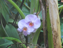 в джунглях Пальма Аквариума