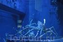 Подводные пришельцы.