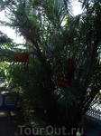 Пуэрто де ля Крус. Ботанический сад, открытый в 1788-1790 гг. по инициативе Дона Алонсо де Нава Гримон. Здесь представлен обширный спектр растительного ...