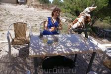 У стен замка Критиния есть очаровательная кафешечка с прекрасным видом, где рады всем и гостям и зверям)