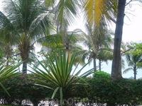 теплынь, море, пальмы - что может быть лучше???