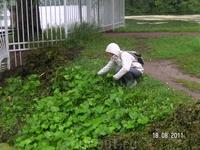 в Екатерининском парке; сбор мать -и -мачехи