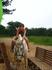 Лошади очень умные!!!! Пошла кружок и на место встала..
