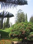 Хайфа.Бахайские сады.Центральная терраса.