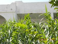 , в окружении цитрусовых и зеленых деревьев