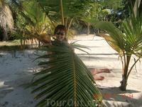Нестрашны нам ни ураган,ни кокосы.Под прикрытием пальмы