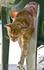 Котик, который укусил за палец ) Лимассол