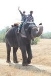 катаюсь на слоне, вернее на слонихе 35 лет по имени Кавери