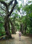 Ботанический сад, занимает площадь в 137 гектаров, а культивированные  растения занимают 54 гектара.