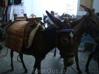 Во-первых в Линдосе есть профсоюз ослятников!!! Чтобы не идти пешком в гору многие туристы пользуются услугами осликов, т.к. это единственный транспорт ...