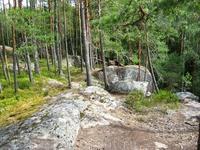 Деревья вдоль скального обрыва.