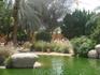 Фламинго в зоопарке в г.Аль-Айн