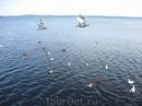 Чайки на озере