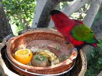 попугаи Лоро парк