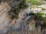 Греция. о.Кефалония. Пляж Миртос. Козы на отвесной стене.