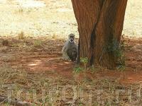 """Мама с младенцем внизу,малыша кормит,а где-то посередине лазает,как """"обезьяна""""-подросток,его правда здесь не видно."""