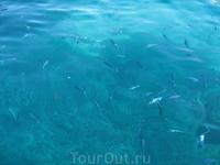 Фото было сделано у берегов Сардинии.