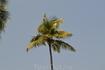 Фото 64 рассказа Индия. ГОА Арпора