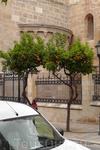 Таррагона здесь и далее. Апельсины растут прямо в городе.
