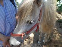 Paradise Park Farm на Самуи. И лошади едят бананы