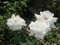 Ослепительные цветы в саду Балчика