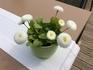 ещё цветочки