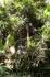 Оранжерея Ботанического сада